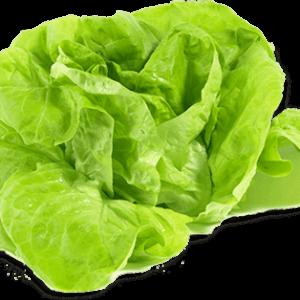 Alface Lisa (UN) – Sem Agrotóxico