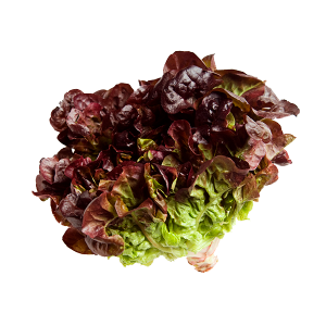 Alface Roxa (UN) – Sem Agrotóxico