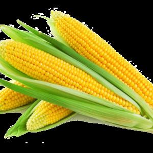 Milho Verde (Pct c/ 3 UN) – Sem Agrotóxico