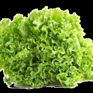 Alface Crespa (UN) – Sem Agrotóxico